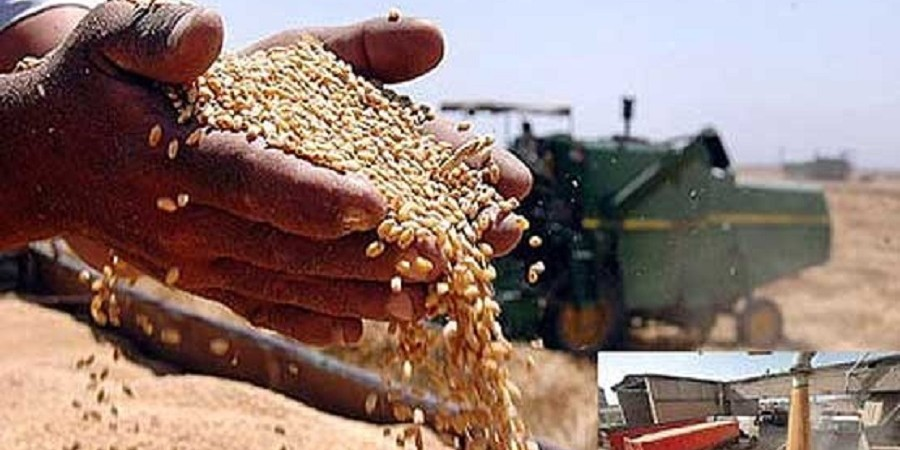 نخستین محموله گندم صادراتی به عمان ارسال شد