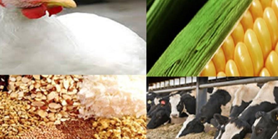 مدیرکل دفتر بهبود تغدیه: استفاده از بقایای کشاورزی و صنایع غذایی در دستور کار قرار میگیرد