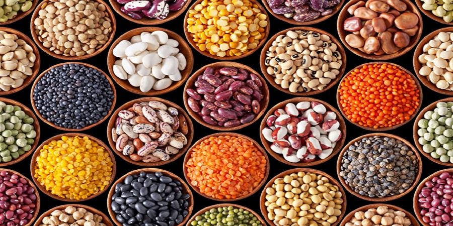 ایجاد قطب علمی حبوبات در پژوهشکده علوم گیاهی دانشگاه فردوسی/بانک بذر بقولات دستاوردی مهم درکشور