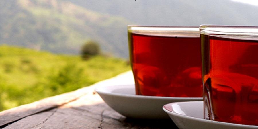 ۸۰ درصد چای مصرفی کشور وارداتی است