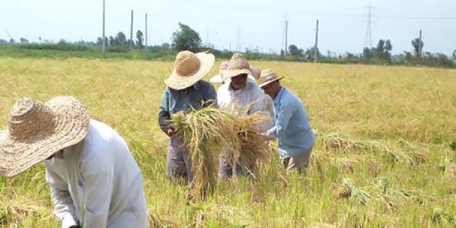 پرداخت وام اشتغال ۱۵ میلیون تومانی به کشاورزان استان تهران