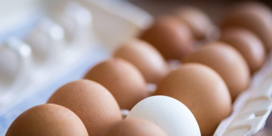 افزایش۳۵درصدی هزینه تولیدتخم مرغ/خسارت انفلوانزای مرغی تسویه شد