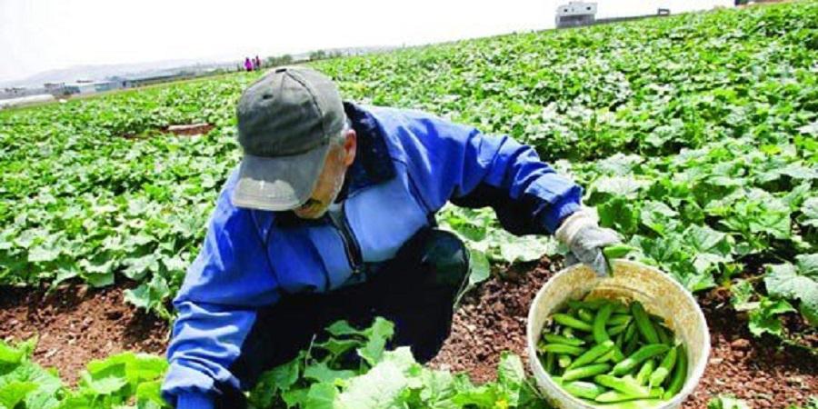 مدیرکل دفتر امور اقتصادی وزارت جهاد کشاورزی تاکید کرد: خروج از طرحهای جزیرهای توسعه مشاغل کشاورزی