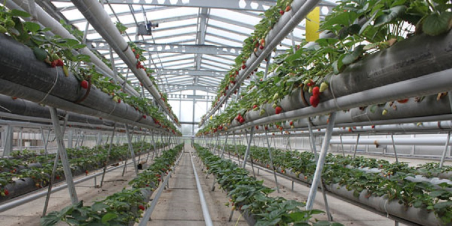 با حضور وزیر جهاد کشاورزی / آغاز ساخت بزرگترین پروژه گلخانهای هیدروپونیک