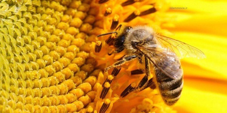 صنعت زنبورداری تا حدودی از تک محصولی خارج شده است