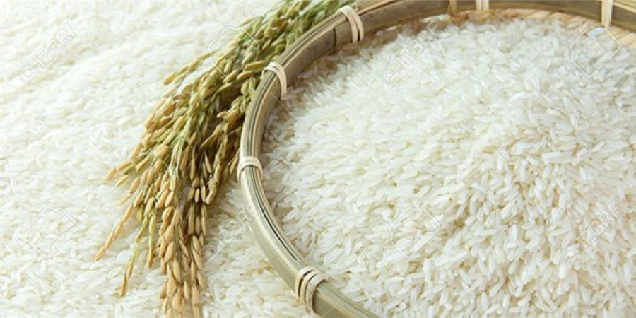 هیچ نوع برنج تراریخته ای در کشور تولید نمی شود