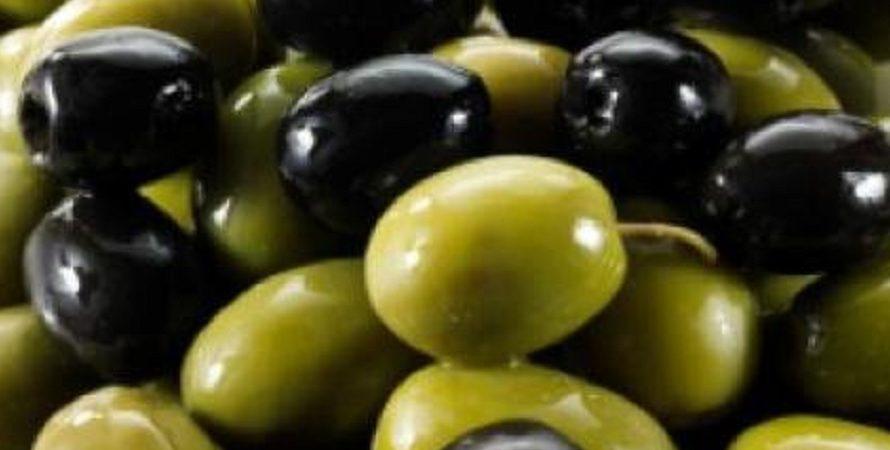 یک مسئول تاکید کرد: تولید محصول زیتون باید اقتصادی شود