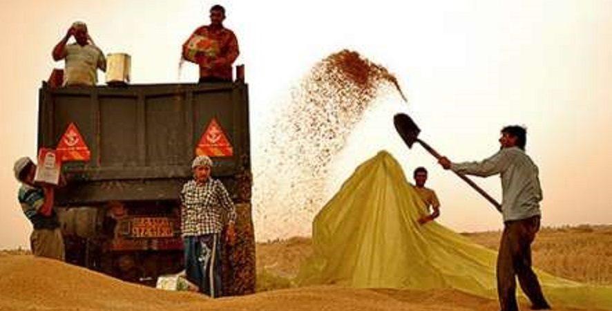 تولید گندم در اصفهان بیش از ۲ برابر شد