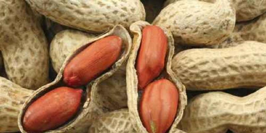 نماینده مردم آستانه اشرفیه در مجلس عنوان کرد: واردات غیر قانونی ۷۰ درصد بادام زمینی به کشور