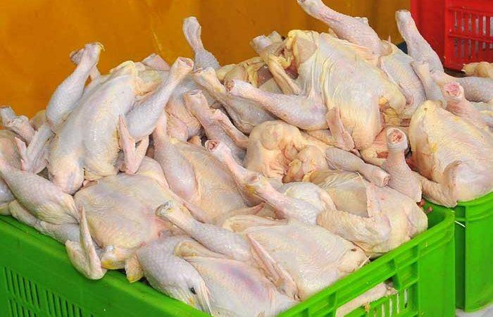 رئیس سازمان دامپزشکی:اعطای برند غذای حلال از این پس در ایران/ هیچ مرغ مردهای وارد بازار نشده است