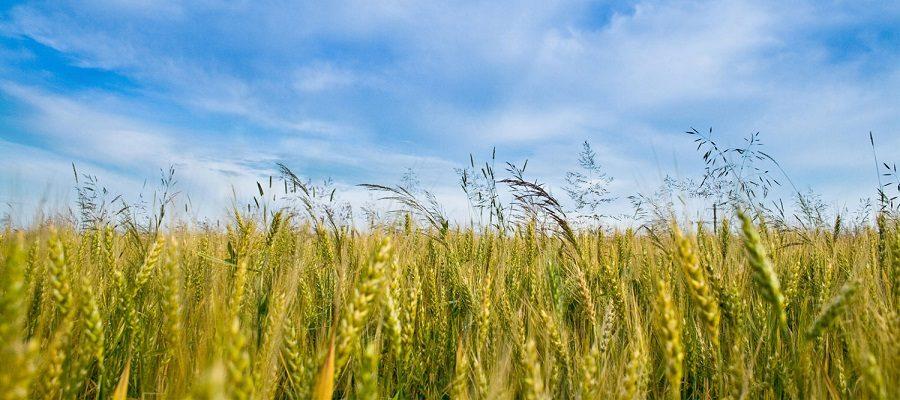 محصولات آببر کشاورزی باید گلخانهای شود/راه حل دوم، واردات است
