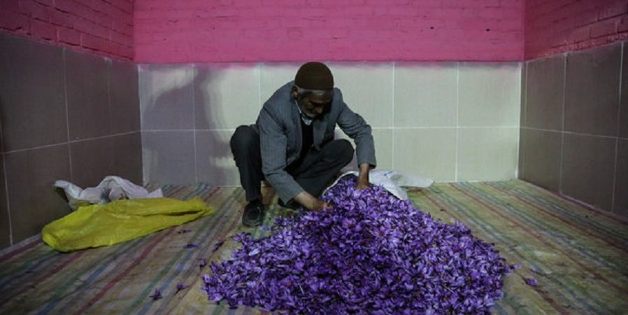 هرگونه خروج پیاز زعفران از کشور ممنوع است