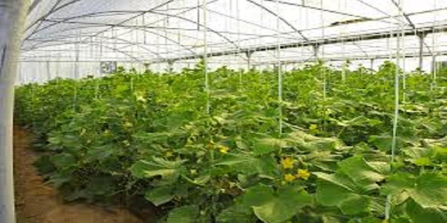 بهره برداری از بزرگترین گلخانه شیشه ای کشور با کشت هیدروپونیک در ارس
