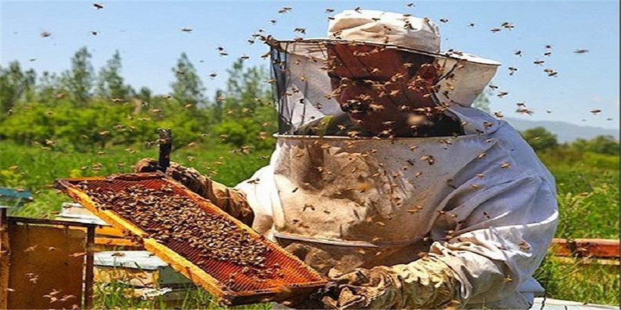 اولویت زنبورداری در مزارع با تولیدکنندگان حرفهای است/ تحریمهای آمریکا در صادرات عسل بیتاثیر است