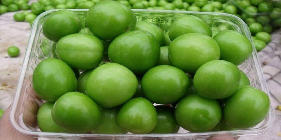 خواص درمانی گوجه سبز یکی از میوههای فصل بهار!