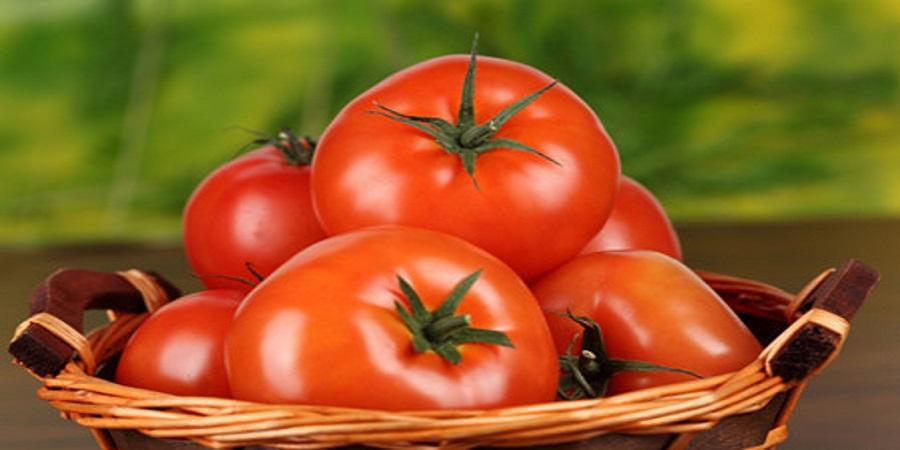 گوجهفرنگی روی دست کشاورزان ماند/ کیلویی ۳۰۰ تومان هم نمیخرند
