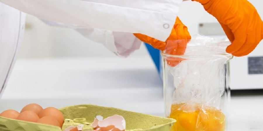 تشخیص سریع آلودگی تخممرغ به باکتری عفونتزا با روش ابداعی محقق دانشگاهی