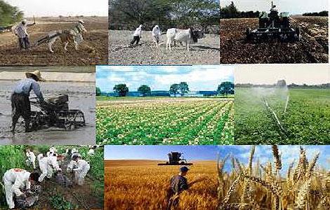 افزایش ۵برابری مروجین کشاورزی/راه اندازی پارک علم و فناوری کشاورزی در البرز