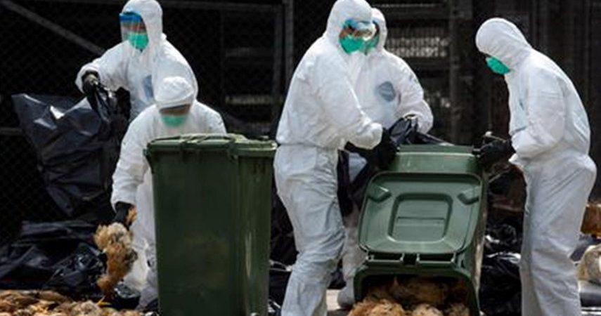 """سازمان دامپزشکی کشور با ارسال نامه ای خواستار شد مرغداران به دلیل """"بیماری آنفلوآنزای فوق حاد پرندگان"""" نمایشگاه نروند"""