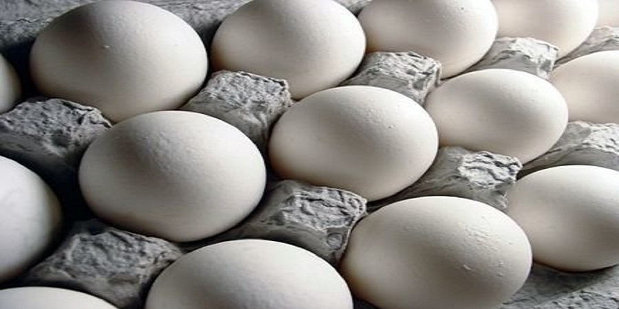 بازگشت آرامش به بازار تخم مرغ/نیازی به واردات نداریم