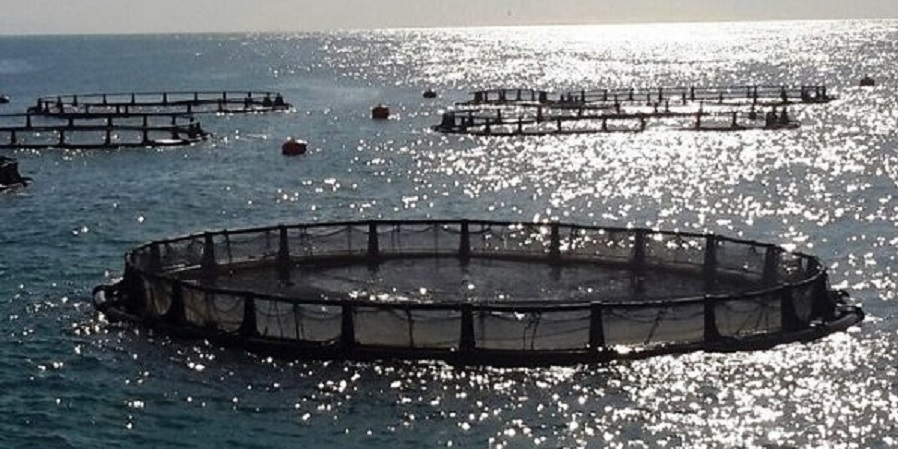 توسعه صنعت پرورش ماهی در قفس در هرمزگان