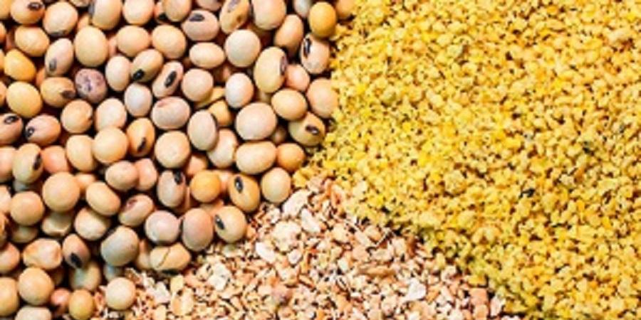 دلایل تغییر قیمت نهاده های وارداتی چیست؟ احتمال افزایش مجدد نرخ فرآورده های پروتئینی