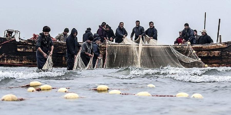 چوب ارزانی رونق صید بر قیمت ماهیان دریایی مازندران