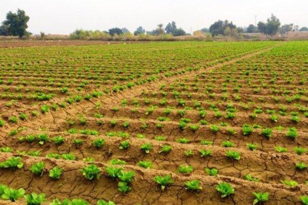 اجرای مدیریت واحد آب در بخش کشاورزی / لزوم کاهش هدررفت پیش ازمصرف