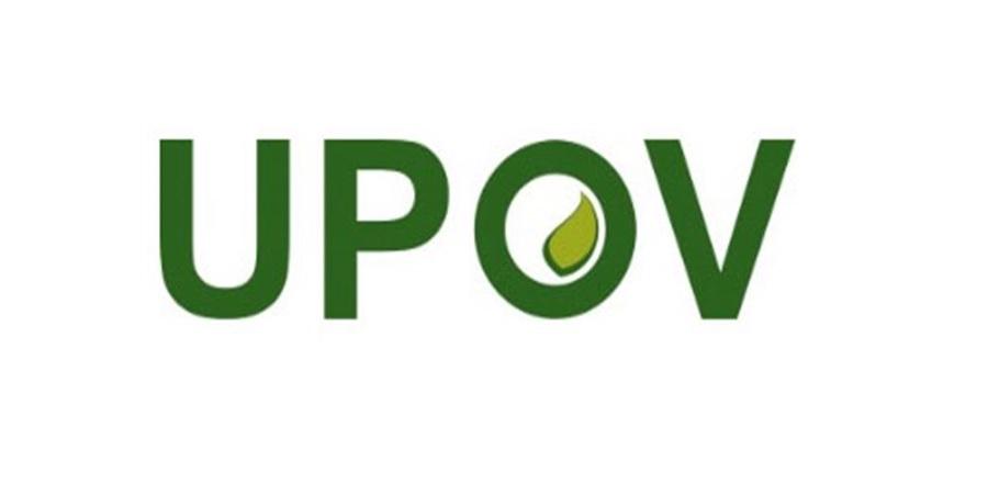 چانهزنی بر سر امنیت غذایی در مجلس/الحاق به UPOV رای میآورد؟!