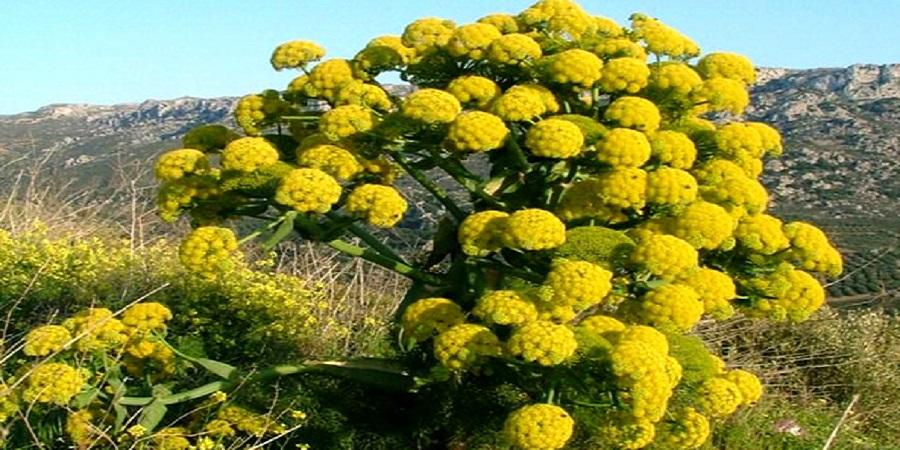 مجری طرح گیاهان دارویی وزارت جهاد کشاورزی اعلام کرد:واردات ۱۵۰میلیون دلاری گیاهان دارویی به کشور