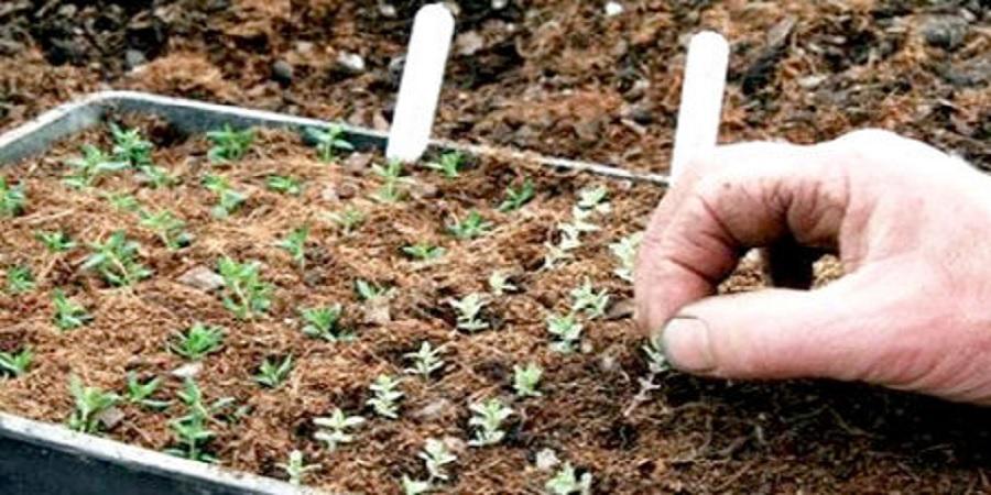 معاون وزیر کشاورزی: بذر مورد نیاز کشاورزان سیلزده تامین شد