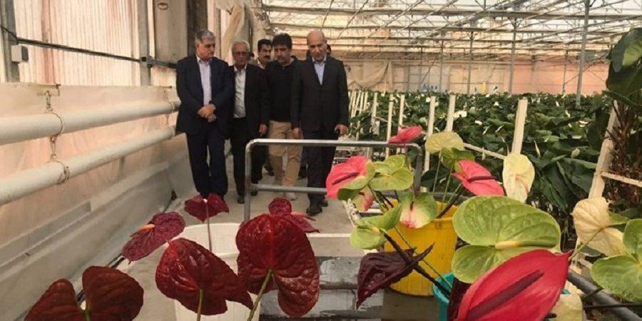در بازدید مدیرعامل بانک کشاورزی از گلخانه نمونه عنوان شد:صادرات گل از ایران به هلند، انگلیس و فرانسه