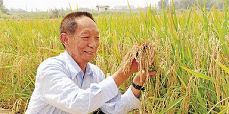 چین چگونه امنیت غذایی جمعیت ۱٫۴ میلیاردنفری را تامین میکند؟