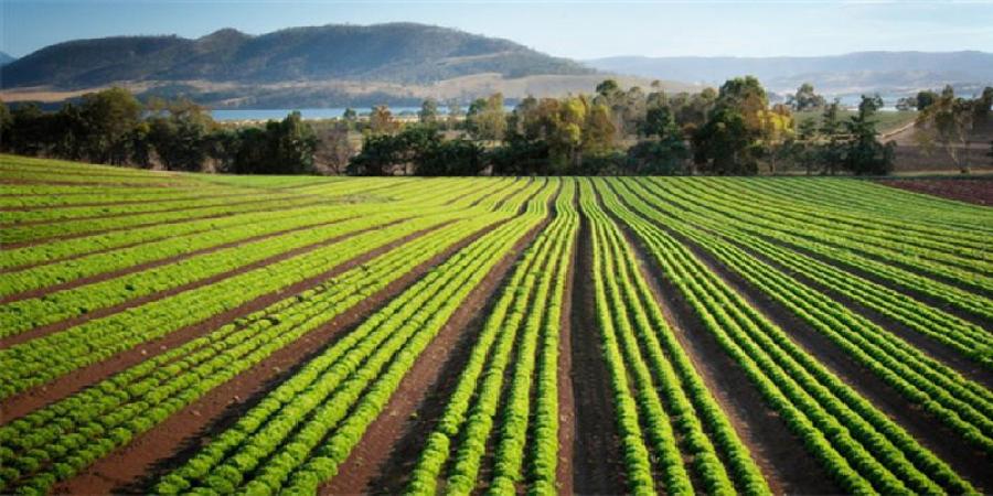 افزایش بهرهوری کشاورزی در کشور با استفاده از تصاویر ماهواره ای