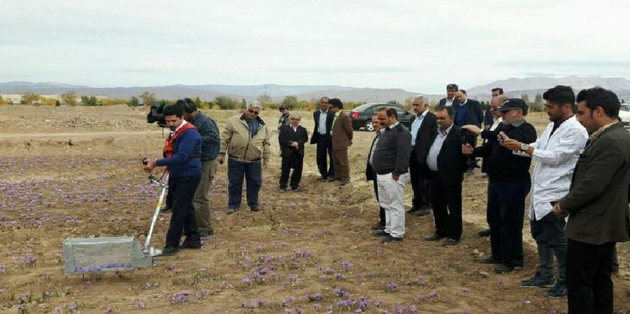 دستگاه برداشت گل زعفران به کمک کشاورزان می آید