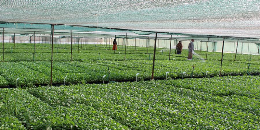 مقامات چینی: بدون توسعه کشاورزی، توسعه سایر بخشها غیرممکن است