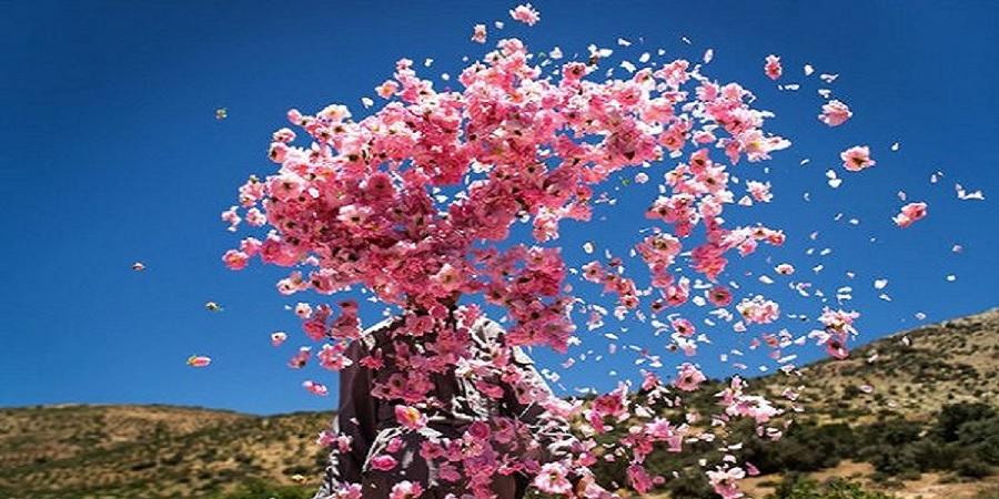 عطر گل و گلاب در کویر پیچید/ ضعف خراسان جنوبی در فرآوری
