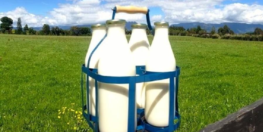 رئیس انجمن صنفی گاوداران: دامداران در انتظار افزایش ۲۲.۵ درصدی نرخ شیرخام هستند