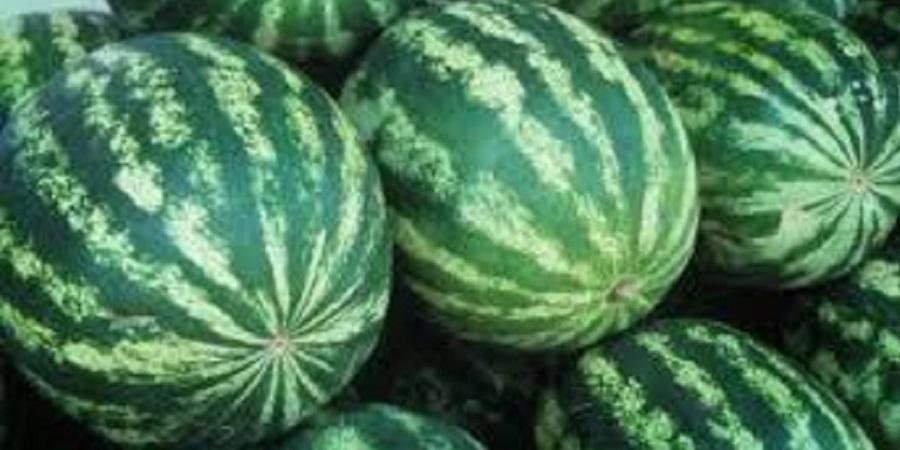 صادرات ۱۰۰ میلیون دلاری گوجه و هندوانه به عراق