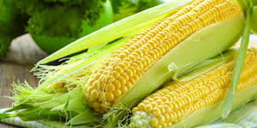 افزایش قیمت گندم و ذرت در بازارهای جهانی