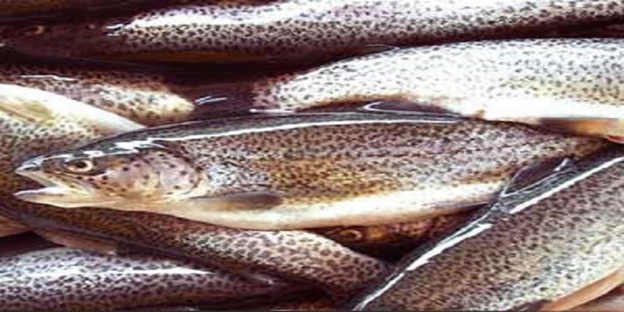 رئیس اداره تکثیر و پرورش ماهیان سردآبی شیلات ایران: سهم ۲۱ درصدی ایران در تولید ماهی قزلآلا رنگین کمان در جهان
