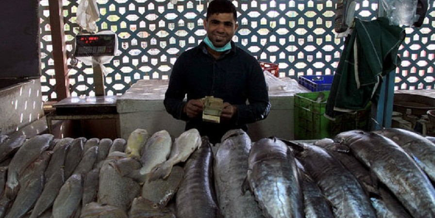 بیمه ۳۱.۵ میلیون قطعه ماهی از مبدا تولید