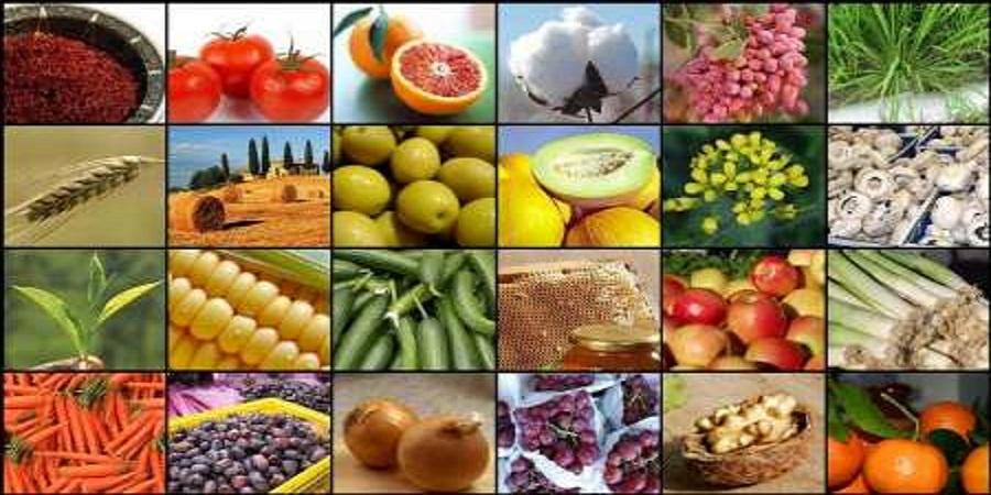 در پنجماهه نخست سال ۹۹؛ ارزآوری ۲.۱ میلیارد دلاری صادرات بخش کشاورزی و غذا