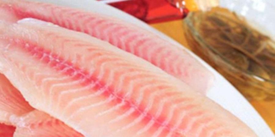 افزایش ۶درصدی تولید ماهی تیلاپیا در جهان