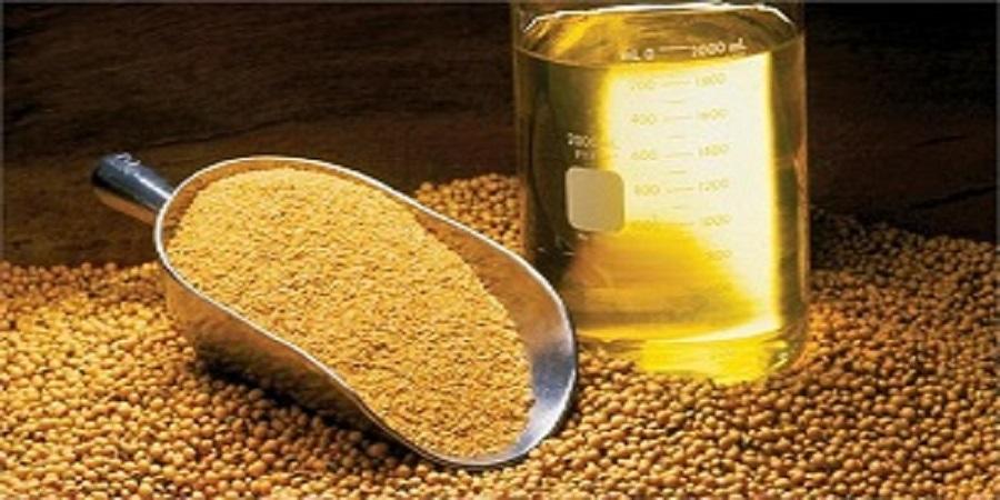 اهمیت استراتژیک تولید دانههای روغنی در اقتصاد ایران/ ۹۰ درصد نیاز کشور از طریق واردات تامین میشود!