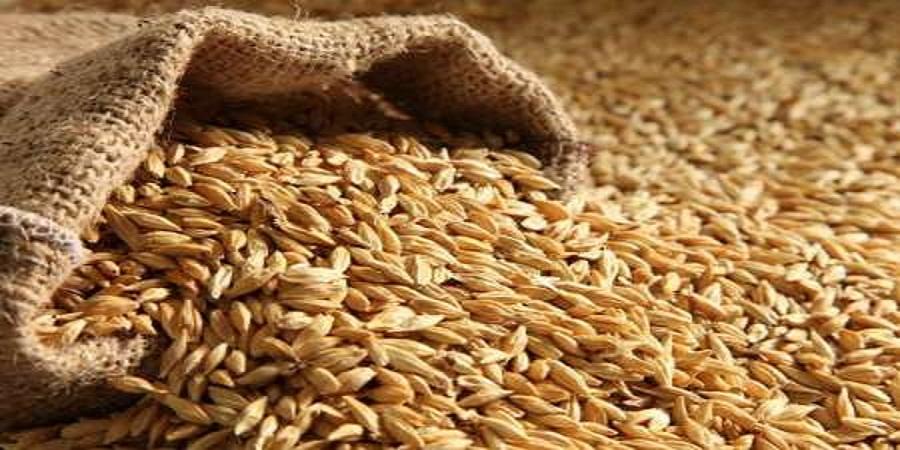 افزایش قیمت خوراک دام و طیور در بازارجهانی