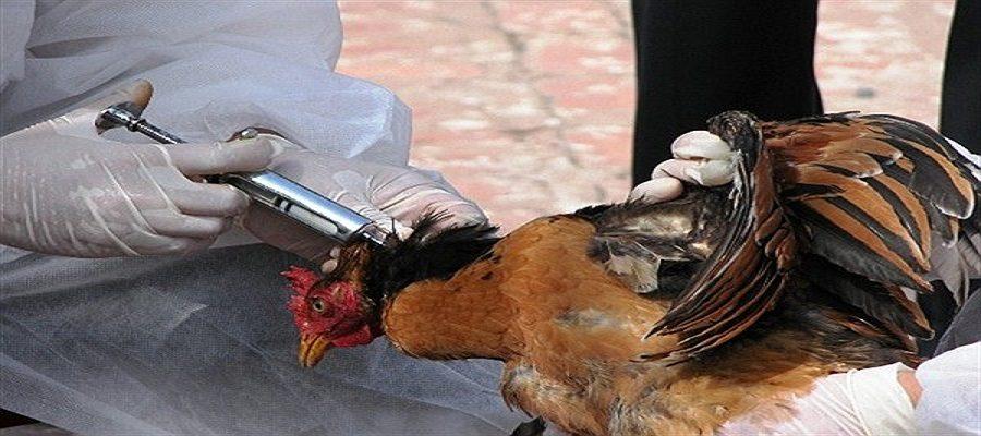 مدیر کل دامپزشکی استان تهران: مرغداران توصیههای دامپزشکی را جدی بگیرند