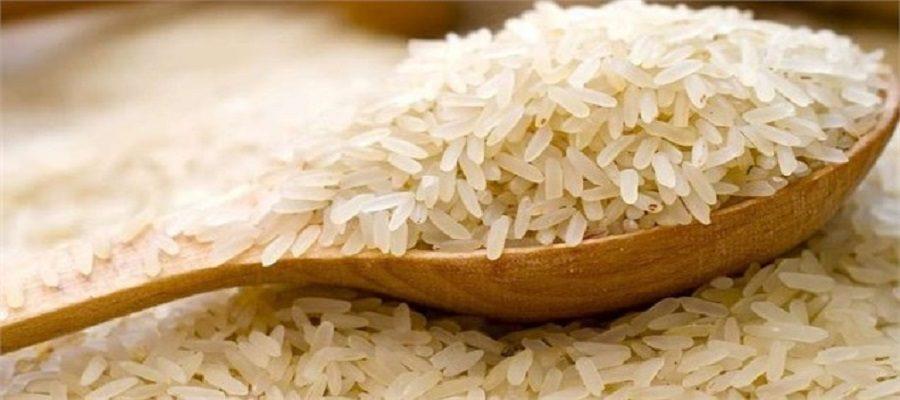 واردات برنج به کشور در فصل برداشت!