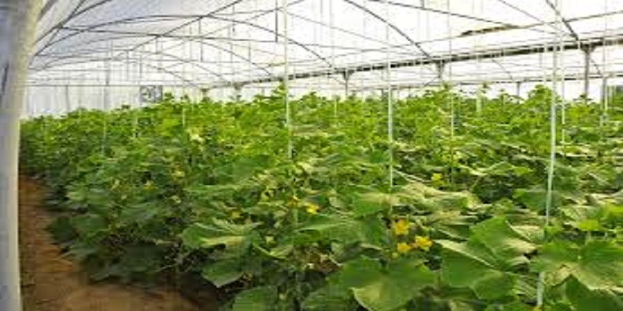 استاندار یزد: گلخانهداران بر بازار صادراتی اوراسیا متمرکز شوند