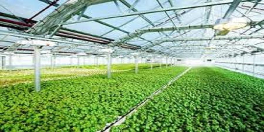 ۲۷۰هزار هکتار زمین در ایران مستعد احداث گلخانه با اشتغال زایی ۱.۷ میلیون نفری